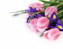 Beautiful fresh spring flowers Stock Photos