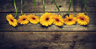 Beautiful Fresh Spring Yellow Gerbers on Old Vintage Wooden Tabl Royalty Free Stock Images