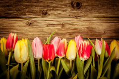 Beautiful fresh tulip border on rustic wood Royalty Free Stock Photo