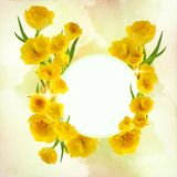Beautiful fresh tulips decorated on a free field can be used as background. Or as an invitation card free space for your text Royalty Free Stock Images