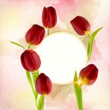 Beautiful fresh tulips decorated on a free field can be used as background. Or as an invitation card free space for your text Stock Image