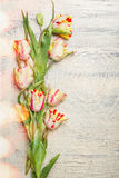Beautiful fresh tulips on light shabby chic background with bokeh, top view Royalty Free Stock Photography