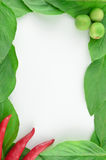 Beautiful fresh vegetable frame Stock Photo