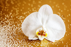 Beautiful fresh white phalaenopsis orchid Stock Photo