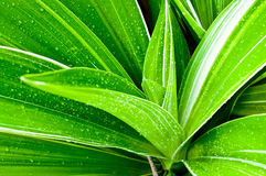 Beautiful of fresh young plant Stock Photo