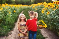 Beautiful friendly children in the field with sunflowers royalty free stock photos