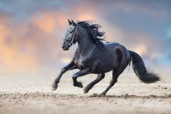 Beautiful frisian stallion. Run in sand against dramatic sky royalty free stock photography