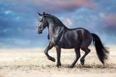 Beautiful frisian stallion dressage. Beautiful frisian stallion run in sand against dramatic sky stock image