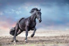 Beautiful frisian stallion run. In sand against dramatic sky stock image