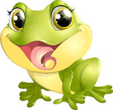Beautiful frog with big eyes Stock Images