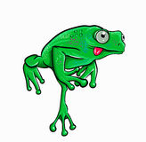 Beautiful frog Stock Photography