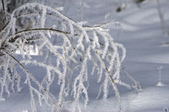 Beautiful frost pattern on the grass. Frosty card. Tenderness an Royalty Free Stock Image