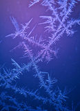 Beautiful frost pattern on window Royalty Free Stock Image
