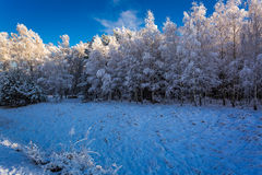 Beautiful frosted forest in winter. Poland Royalty Free Stock Photos
