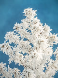 Beautiful frosted plant Stock Photography