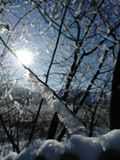 Beautiful frosty Ukrainian winter of 2018. The trees are covered with frosty snow. On the street minus 20 degrees of cold Royalty Free Stock Images