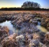 Beautiful frozen field Winter landscape Royalty Free Stock Photo