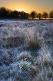 Beautiful frozen field Winter landscape Stock Images