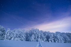 Frozen forest under a sky filled with stars royalty free stock images