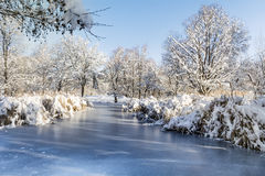 Beautiful frozen lake in Sofia,Bulgaria. Beautiful Winter lake and trees- South Park in Sofia, Bulgaria royalty free stock photos