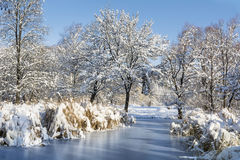 Beautiful frozen lake in Sofia,Bulgaria. Beautiful Winter lake and trees- South Park in Sofia, Bulgaria royalty free stock image