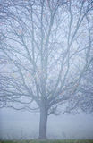 Beautiful frozen tree Stock Images
