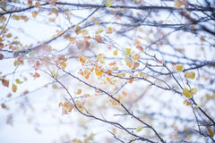 Beautiful frozen tree branch and bright orange leaves. Stock Image