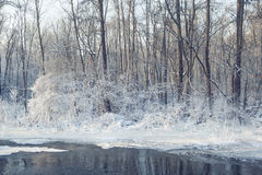 Beautiful frozen winter nature. Forest and river covered by ice Stock Photos