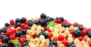 Beautiful fruit. Macro photo of red, black abd white currant with leaves isolated on white Stock Images