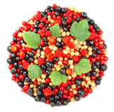 Beautiful fruit. Raspberries and currant isolated on white stock photography