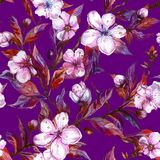Beautiful fruit tree twigs in bloom on bright purple background. Big flowers on plum tree branch. Spring seamless floral pattern. Watercolor painting. Hand Stock Images