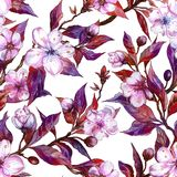 Beautiful fruit tree twigs in bloom on white background. Pink flowers and red and purple leaves. Spring seamless floral pattern. Watercolor painting. Hand Royalty Free Stock Photo