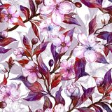 Beautiful fruit tree twigs in bloom. White and pink flowers and purple leaves. Spring background. Seamless floral pattern. Watercolor painting. Hand drawn Stock Photography