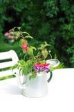 Beautiful fuchsia close up Stock Photography