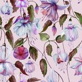 Beautiful fuchsia flowers on climbing twigs on pink background. Seamless floral pattern. Watercolor painting. Hand painted illustration. Fabric, wallpaper Royalty Free Illustration