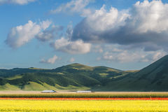 Beautiful full color spring flowers in Umbria, Italy Royalty Free Stock Photography