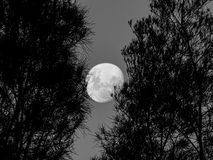 Full Moon Sydney. Beautiful full moon captured the night before the 2018 Lunar Trifecta Royalty Free Stock Photo