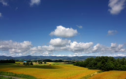 Beautiful Furano. Photo was taken in Furano of hokkaido royalty free stock photo