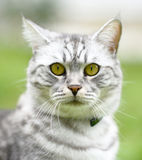 Beautiful fury cat portrait Royalty Free Stock Photos