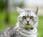 Beautiful fury cat portrait Stock Photo
