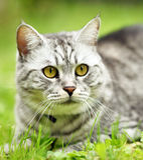 Beautiful fury cat portrait Stock Photography