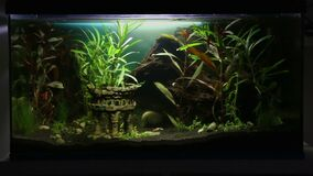 Beautiful 14 gallon tank, 54l, ruin decoration, green and red plants