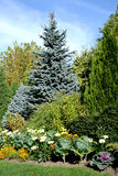 Beautiful garden. Coniferous garden with flowers and decorative cabbage Royalty Free Stock Photography