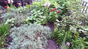 Garden Patch Kids. A beautiful garden by an apartment building in Edgewater,  Illinois Stock Images