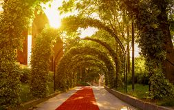 Beautiful garden archway. Lush green hanging foliage forming dramatic archway with sunset light streaming through in scenic garden stock photo