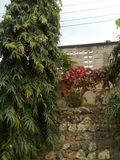 Beautiful garden available in my home place in Tanzania stock images
