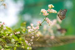 Beautiful garden with Blue Glassy Tiger flying Stock Images