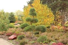 Beautiful garden bonsai in the autumn garden stock images