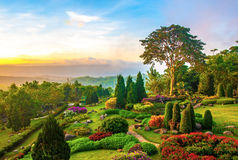 Beautiful garden of colorful flowers on hill Royalty Free Stock Photos