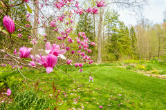 Beautiful garden with colorful flowers. A view of the garden with pink flowers in the foreground Stock Photography